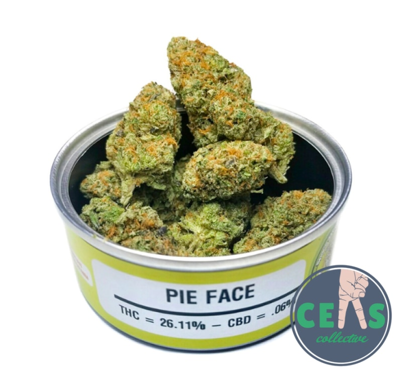 Pie Face - Space Monkey Meds