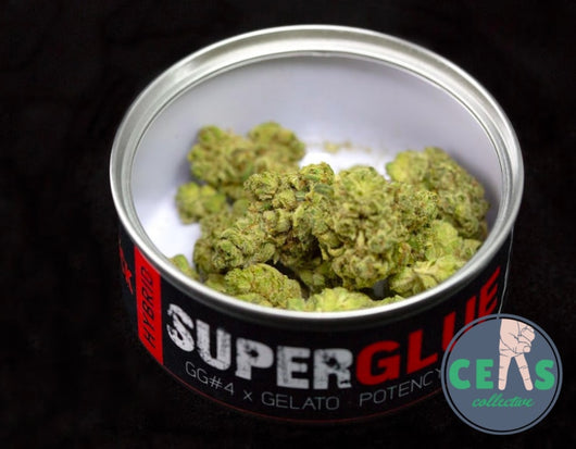 Super Glue - Ceas Exotics
