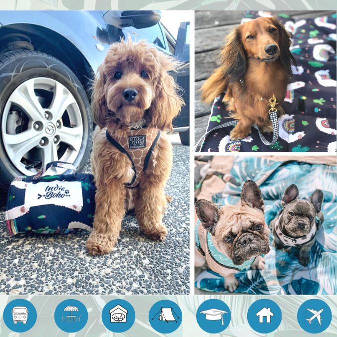 Dog travel mats in Australia