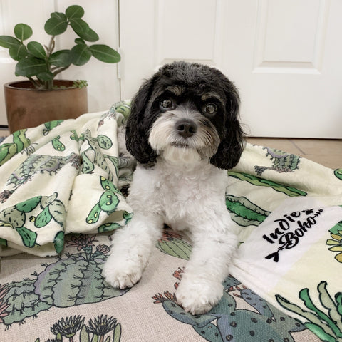 Indie Boho best dog beds and pet blankets