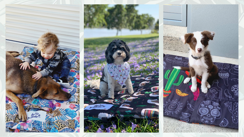 Dog and kids play mat, dog outdoor bed, puppy school mat
