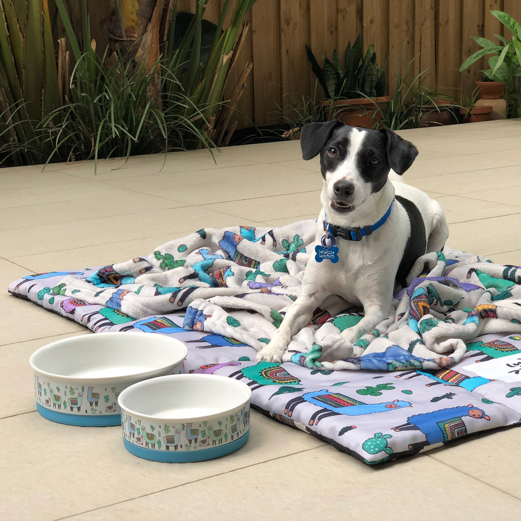 Dog Bowl Sets