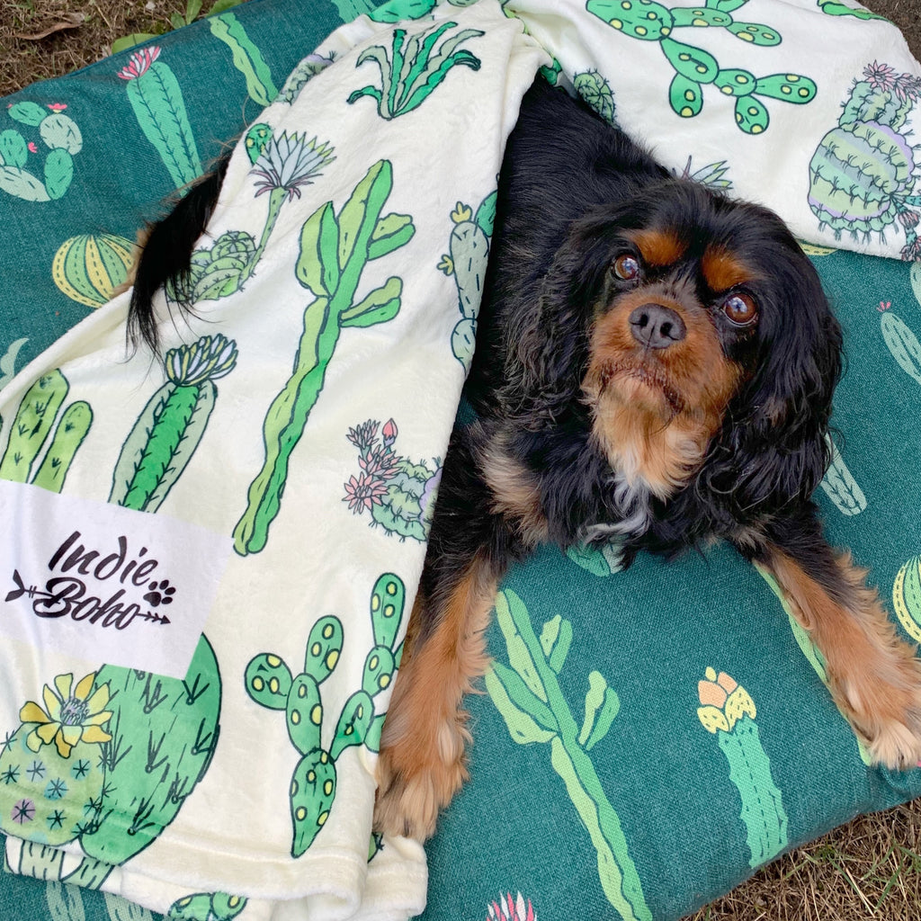 Cactus Fusion (NEW)- Designer Pet Blanket