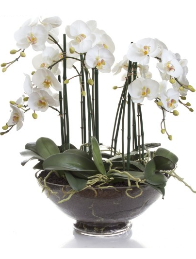 The Fake Orchid