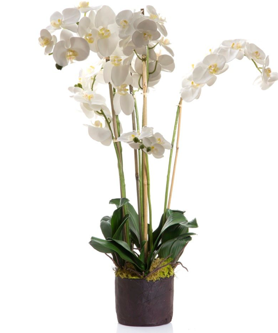 Designer Orchid with Moss 85cm