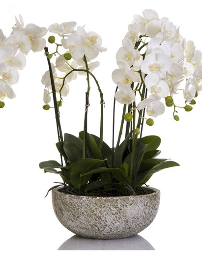 Orchid in Clay Pot 62cm