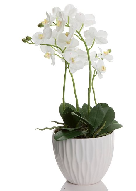Orchid Corrugated White Pot 60cm