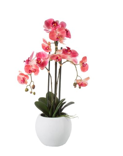 Pink Orchid 65cm Pre-Order