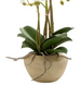 Orchid Stone Pot Small 50cm