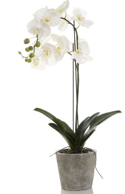 Orchid Tall Clay Pot 84cm