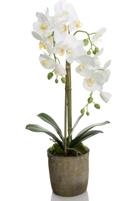 Orchid Terracotta 70cm