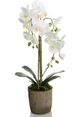 Orchid Terracotta 65cm