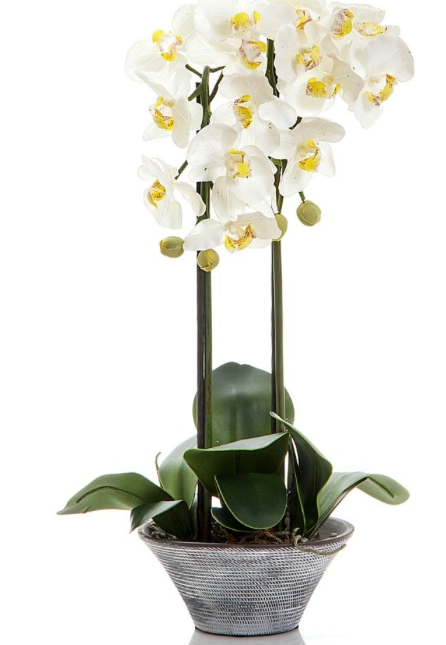 Orchid Textured Pot 55cm