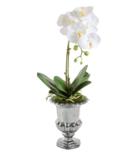 Orchid Silver Urn 55cm