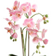 Orchid Pink Terracotta 65cm