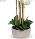 Orchid Clay Tall 71cm