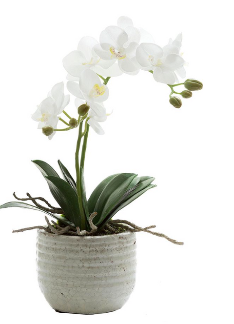 White Orchid Crackle Pot 40cm