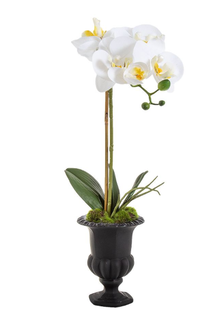 Orchid Black Urn Mini 55cm