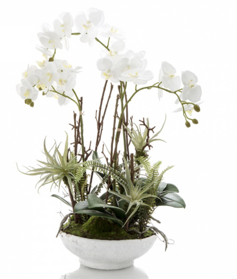 Orchid White with Fern 60cm