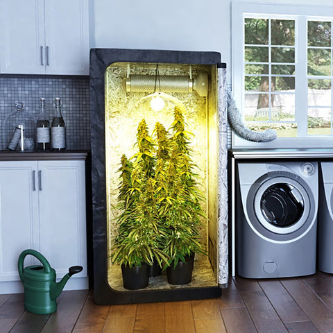 Weed Growing Kit