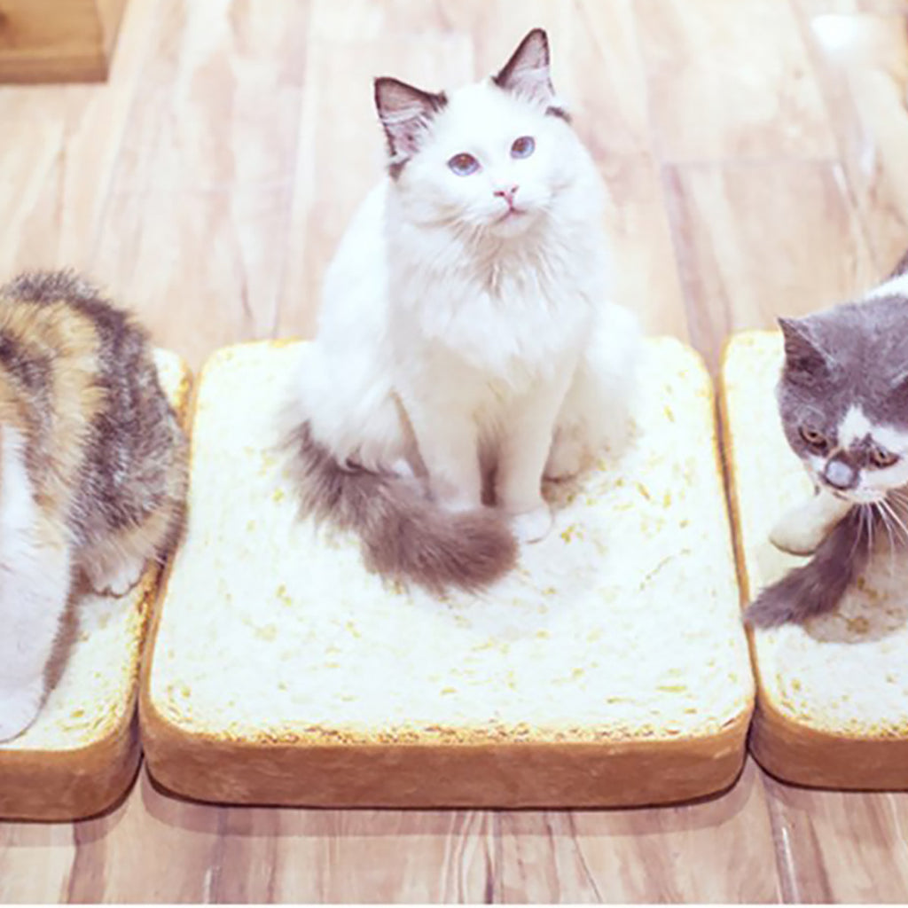 Toast Cat Bed
