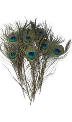 Peacock Feathers - Small, Medium or Large