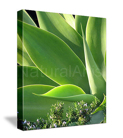 Agave Photo Art Print On Canvas