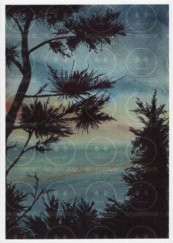 Shore Pines Sneak Peek Hwy 101 Oregon Coastal Shoreline Art Print