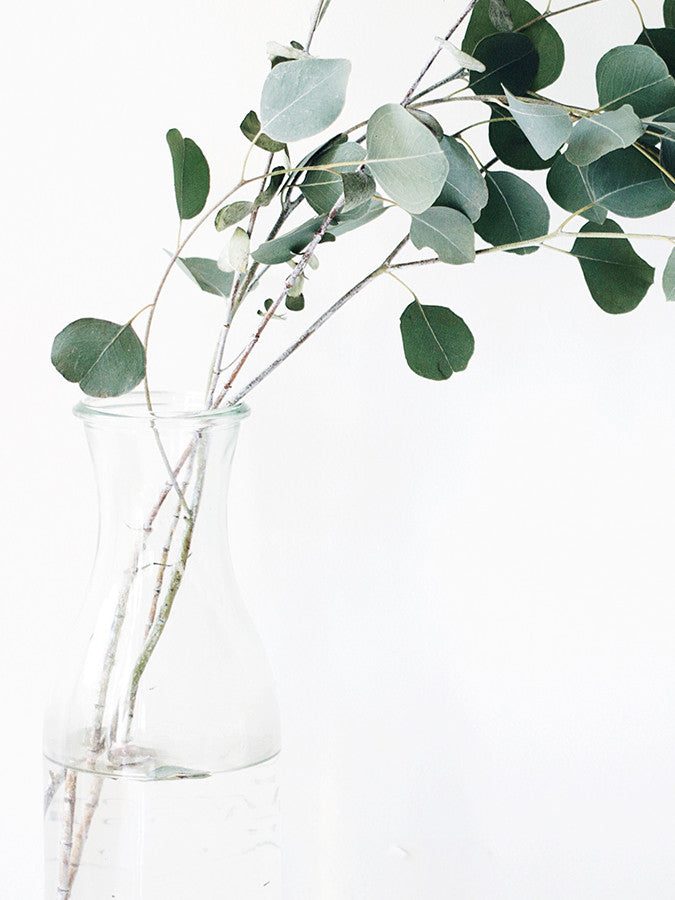 Eucalyptus in Glass Vase
