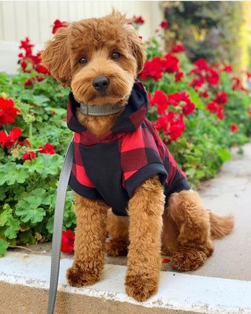 Bamboo Buffalo Plaid Dog Hoodie Harry Hoodie