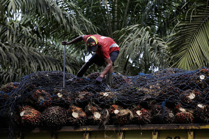 Debating the Facts of Palm Oil