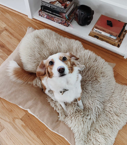 Desert Linen Dog Bed