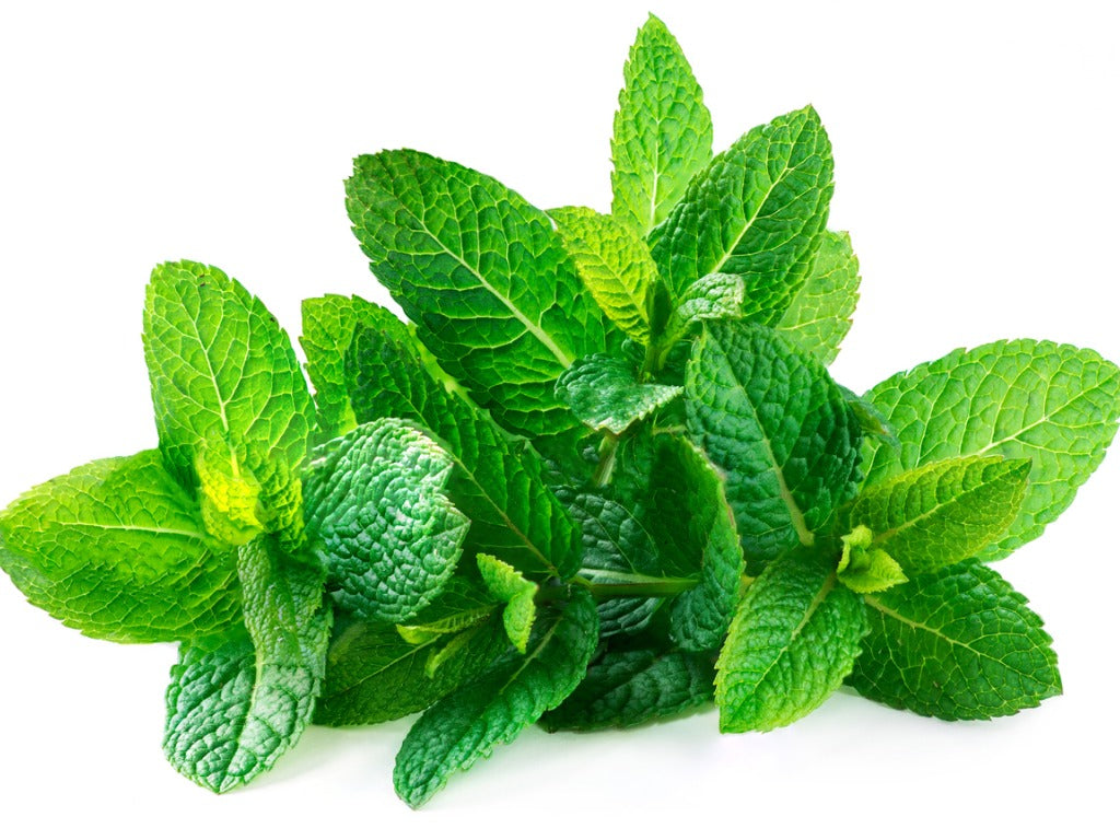 Planting,Growing and Maintaining the Mint plants