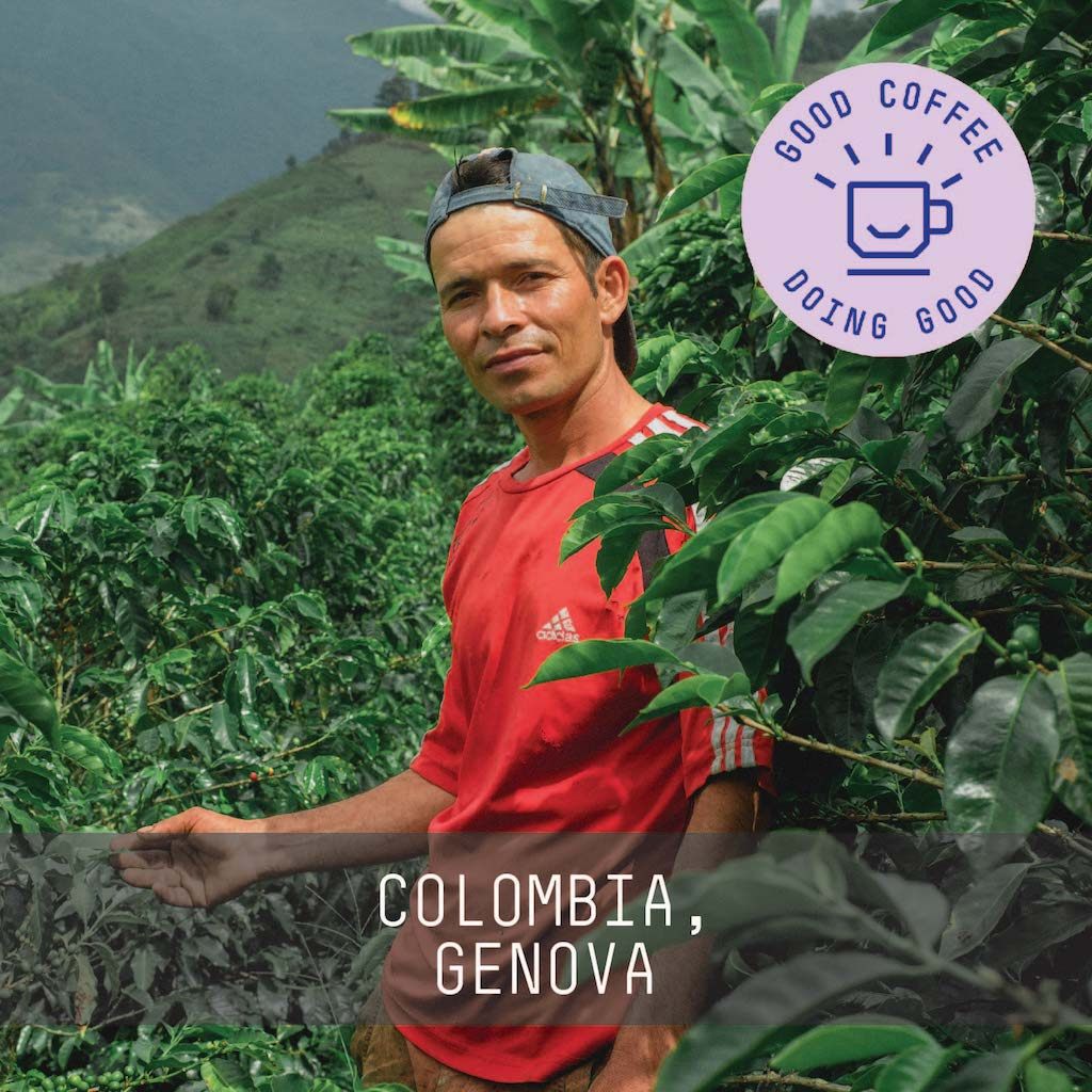 Colombia Auricel Conde Washed - Single Origin Espresso