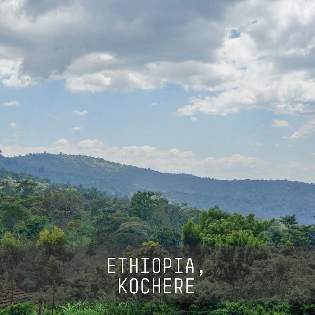 Ethiopia, Chelchele Washed - Single Origin Espresso