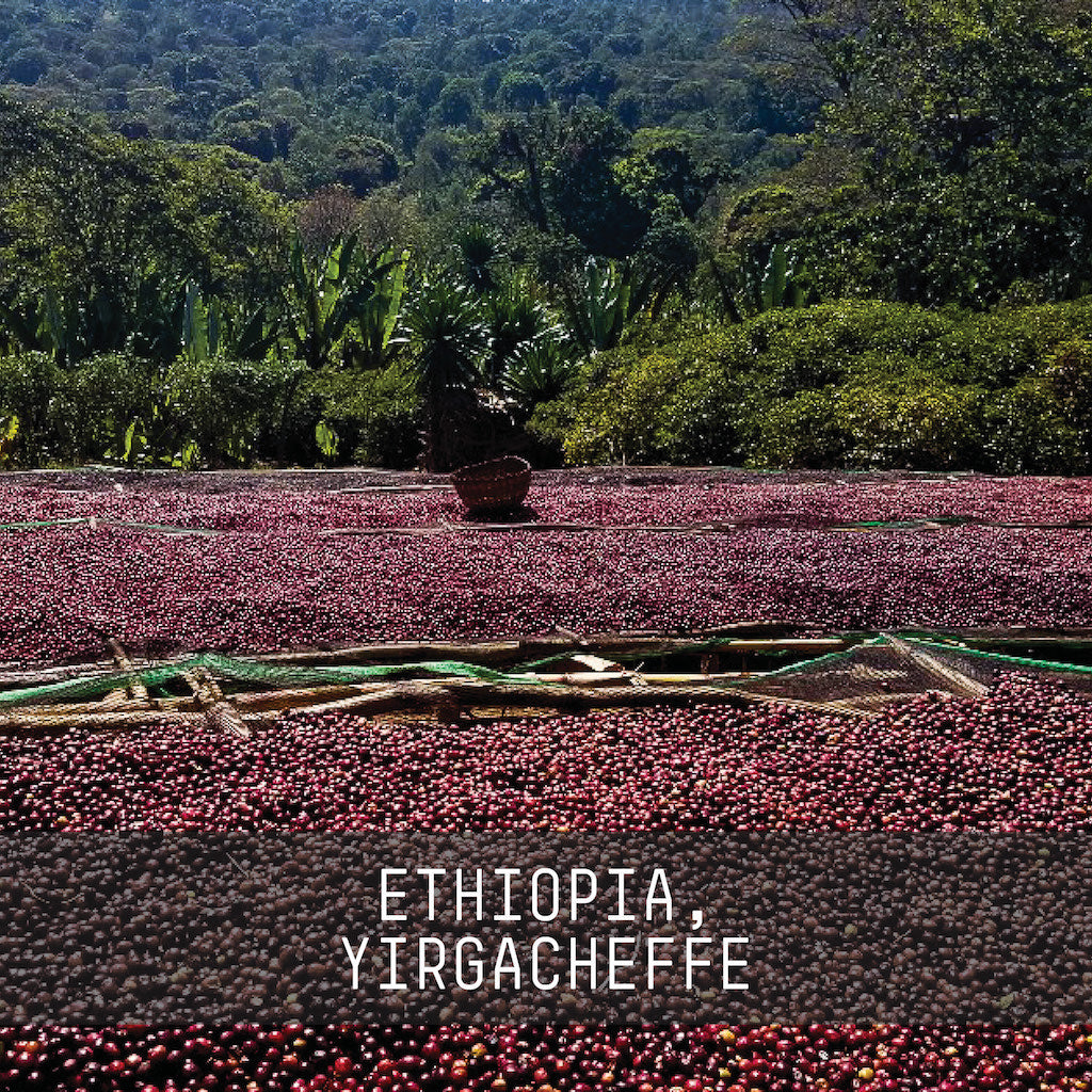 Ethiopia, Banko Gotiti - Single Origin Espresso