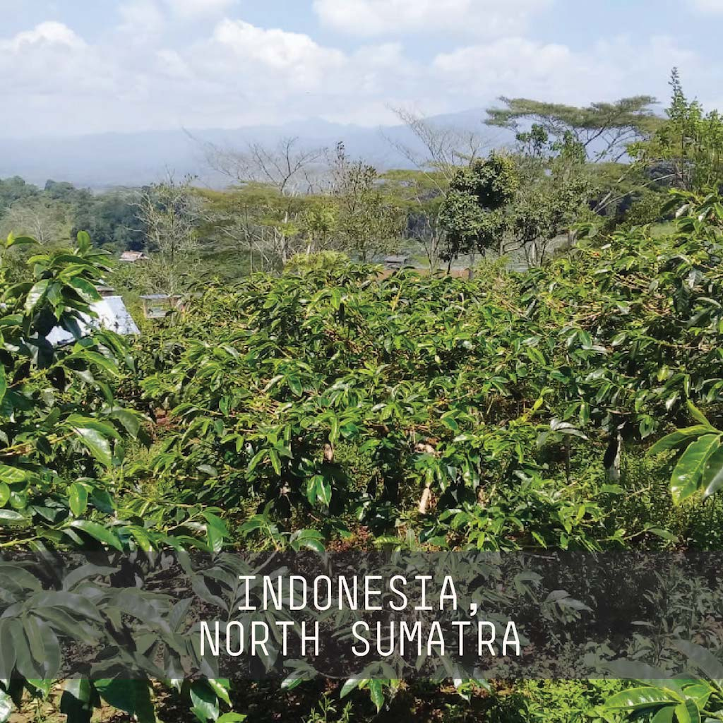 Indonesia, Aceh Ribang Gayo - Single Origin Espresso