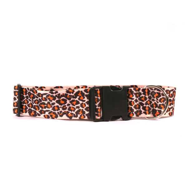 2 Inch Wide Leopard Dog Collar, fits 18-28 inches