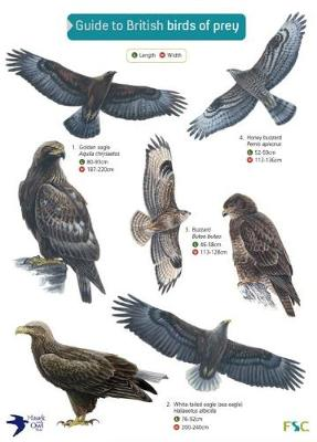 Guide to British Birds of Prey - Simon Norman