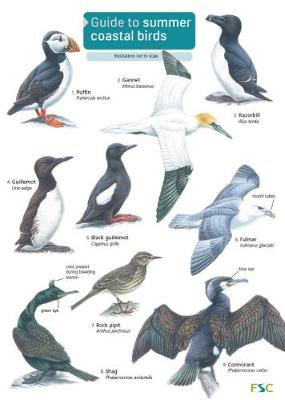 Guide to Summer Coastal Birds - Rebecca Farley-Brown