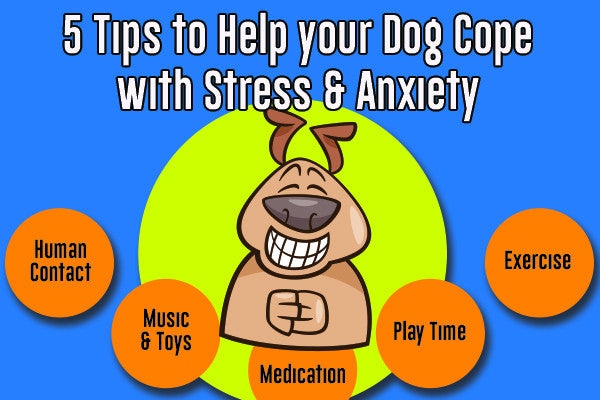 5 Tips to Help Your Dog Cope With Stress and Anxiety
