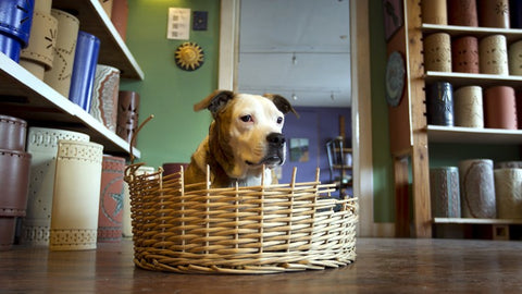 Kelli the shop dog at Clayworks - photo from Austin American Statesman