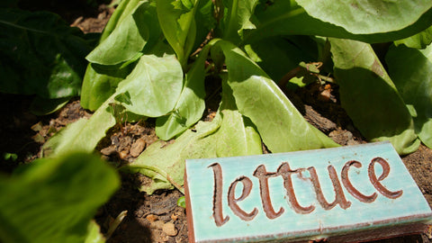Vegetable Garden Markers - Clayworks Studio/Gallery