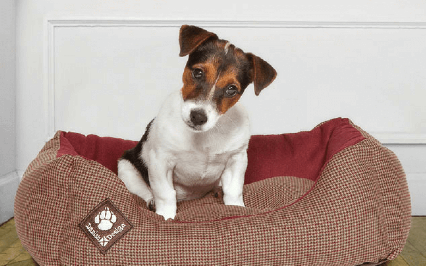 Cute Little Jack Russel Dog Sitting in his Dog Bed