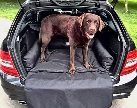 Boot Dog Bed in Car with Dog Standing
