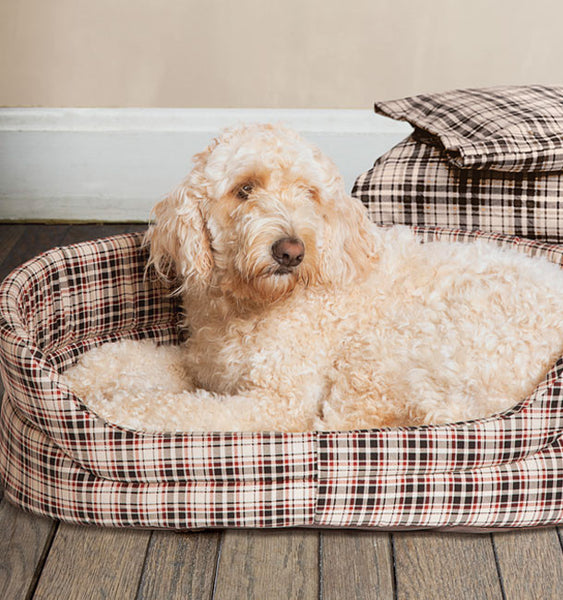 Dog lying in Classic Check Dog Bed, with group of dog beds in background
