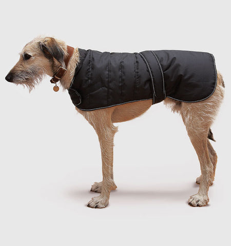 Harness Dog Coat with Dog