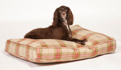Newton Box Duvet in Moss with Dog Lying