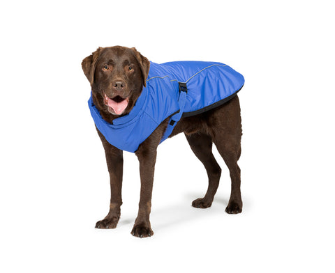 Blue Sports Luxe Dog Coat with Dog Wearing