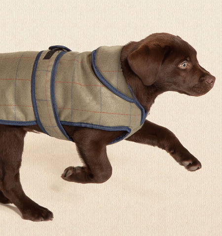 Twee Dog Coat with Dog Wearing It